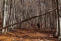 Trekking Parco Nazionale D'Abruzzo Arkivfoto
