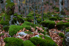 Trekking Parco Nazionale D'Abruzzo Fotografering för Bildbyråer
