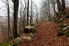 Trekking Parco Nazionale D'Abruzzo Royaltyfri Bild