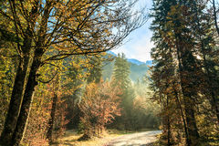 Trekking path in an autumn day in the alps Royalty Free Stock Photography