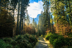 Trekking path in an autumn day in the alps. A trekking road in the italian alps douring a colorful autumn Royalty Free Stock Photo