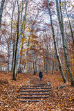Trekking path in the forest with a girl walking. A pedonal path in the wood of Salzburg, Austria Royalty Free Stock Image
