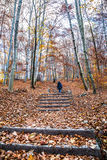 Trekking path in the forest with a girl walking Stock Photos
