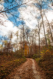 Trekking path in the forest Royalty Free Stock Photo