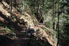 Trekking path Stock Image