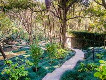 Trekking path among trees and plants in baijnath india Royalty Free Stock Images