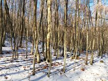 Trekking ride through the snowy forest Stock Photography
