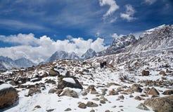 Trekking in Sagarmatha national park, Nepal. Himalayan Range, view from Khumbu valley, Sagarmatha National park, Everest region, Eastern Nepal Royalty Free Stock Photos