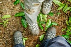 Trekking skor på växt- sidor Royaltyfria Bilder