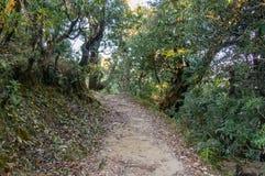 Trekking slinga till och med tjock tempererad skog i berg av Himalayas i Uttrakhand Royaltyfri Foto