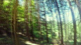 Trekking through summer deep highland forest at Carpathian mountains. Ukraine destinations travel background stock video footage