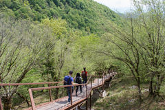 Trekking together. Travelers travel on the artificial roadway In the forest of the mountains reserve. Trekking together. Active hikers. Travelers travel on the Stock Photography