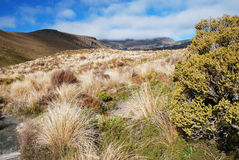 Trekking in Tongariro Stock Photo