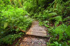 Trekking trail at jungles of ropical rain forest. Thailand Royalty Free Stock Images