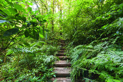 Trekking trail leading through jungle landscape of tropical forest Royalty Free Stock Images