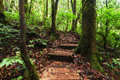 Trekking trail leading through jungle landscape of tropical forest Stock Images