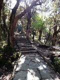 The trekking trail in the woods, Nepal Stock Photos