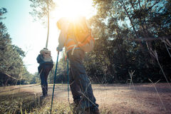 Trekking. Two woman trekking along the forest pathway with trekking pole in morning sunlight Stock Photography