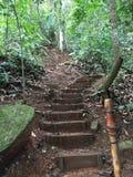 Trekking w Cerro Danta, Heredia, Costa Rica Zielona roślinność r szeroko fotografia stock