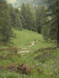 Trekking w Mocheni Valey w Trentino Obrazy Stock