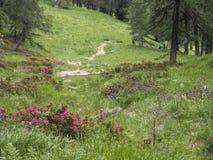 Trekking w Mocheni Valey w Trentino Zdjęcia Stock