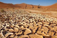 Trekking in woestijn Royalty-vrije Stock Afbeelding