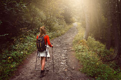 Trekking woman on a forest trail Royalty Free Stock Image