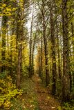 Pathway in the woods in autumn. A trekking Woodpath in autumn in italy, at Genga near the Frasassi caves Stock Photo