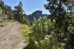 Trekkingsroute in Soria, Gran Canaria Stock Fotografie