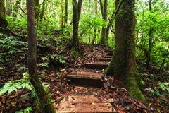 Trekkingssleep die door wildernislandschap leiden van tropisch bos Stock Afbeeldingen