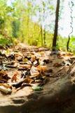 Trekkingsstraßenabdeckung mit trockenen Blättern stockfoto