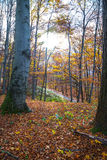 Trekkingsweg in het bos Stock Fotografie