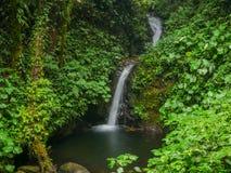 Trekkinreis in Monteverde stock afbeelding