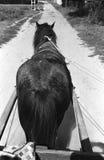 Trekpaard op zandweg Royalty-vrije Stock Afbeeldingen