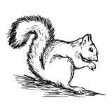 Trekt de illustratie vectorhand geïsoleerde krabbels van eekhoorn op wh Stock Foto's