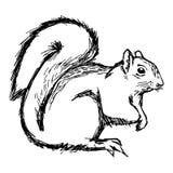 Trekt de illustratie vectorhand geïsoleerde krabbels van eekhoorn op wh Stock Afbeeldingen