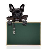 Trela de couro do cão Foto de Stock