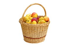 Trellis basket full of bio apples Stock Photography