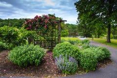 Trellis Blooming Pink Roses Romantic Garden Stock Photography