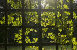 Trellis with plants Royalty Free Stock Photography