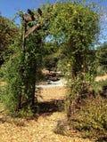 Trellis. Tree Garden, Heather Farm Park, Walnut Creek, California Stock Photo