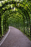 Trellis tunnel, Germany Linderhof Stock Images