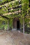 trellis zakrywający winograd Zdjęcie Royalty Free