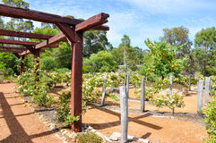 Trellises and Arbor: Amaze'n Margaret River. MARGARET RIVER,WA,AUSTRALIA-JANUARY 16,2016: Trellises and arbor at the Amaze'n Margaret River botanical gardens in Stock Photography