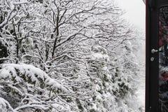 Trem perto das árvores cobertos de neve Foto de Stock Royalty Free