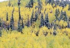 Trembles et première neige près de Ridgeway, dernière route de ranch du dollar, le Colorado photographie stock libre de droits