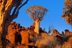 Tremblez l'arbre Photo libre de droits