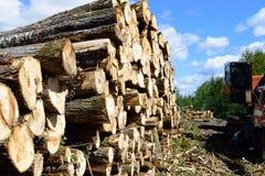 Trembling Aspen (Populus tremuloides) on Summer Log Landing. Log loader and aspen pulp pile Stock Image
