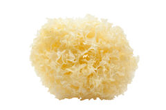 Tremella Royalty Free Stock Images