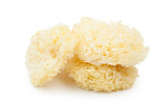 Tremella Stock Photos
